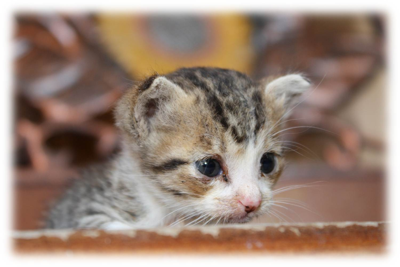 Kucing1jpg