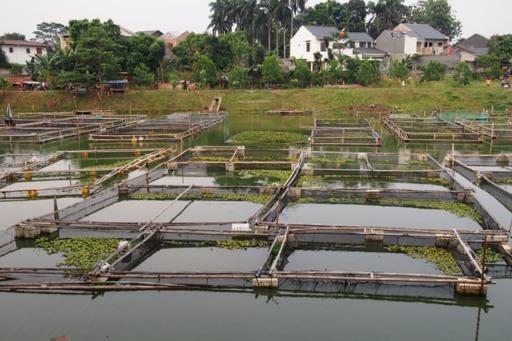 Budi daya Ikan dalam Keramba